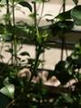 庭作業で得られた収穫