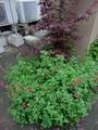 梅雨明け 夏花壇へ
