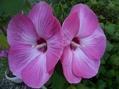 初めての花。