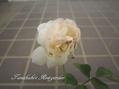 今日のバラ様とガイラルディア
