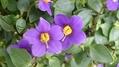 紫の花たち