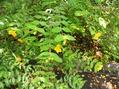移動する植物