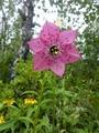 この花を見るために!①