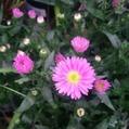 関東地方梅雨明けてないのに!秋の植物が入荷。