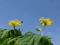 大小の黄色いお花のそっくりさん(*'▽')