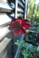 いろいろなお花たち
