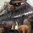恐竜展 名古屋市科学館でやってまーす