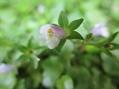 紫陽花から 木槿へ…('-'*)♪