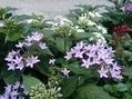 通り沿いの花壇は夏仕様に模様替え