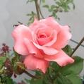 3番花…次々と‼️