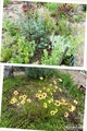 梅雨晴れの花畑