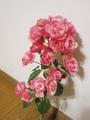 薔薇(アンジェラ・レッドインテューション)グラジオラス
