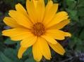 お花畑の花たち