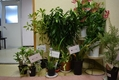 ネコにとって危険な植物