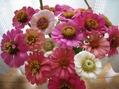 花と戯れ、あ~幸せ