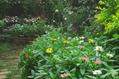 花壇らしくなってきました。