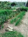 草むしり日和