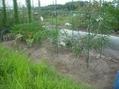 貸農園収穫20160724
