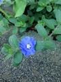 ミニ花壇の成長
