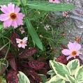お花も良いけど葉っぱもね💕