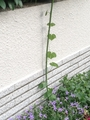 チョコざい風花壇ができました❗️