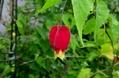 赤いお花たち