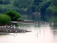 中洲は野鳥の楽園。ウォーキングMS④169日目(1264日目)