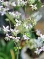 小さな花[i:203]
