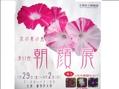 京都でも朝顔展、開催!1000鉢出ます!