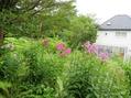 今日の庭から 7.25