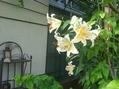 直次郎展 夏の花