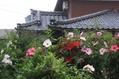 花束タイタンビカス!