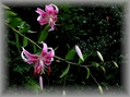 0丁目の花