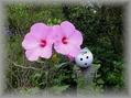 一丁目の花