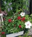 お花がいっぱい('-'*)♪