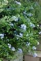 今朝の庭♪