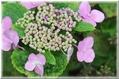 ピンクの花 ②