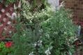 夫々の花壇