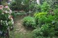 今朝は庭の雑草とり