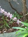 ヤブランの花🌸🌸と空の景色🌻