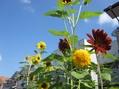 夏の花(ひまわり・グラジオラス)
