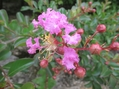 咲いてのお楽しみの蕾です。('-'*)♪