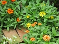 夏の花 🌼