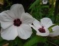 今日の花・・