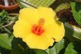 暑い中の開花