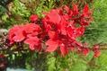 ハーブはいっぱいでしたが、お花が・・・。