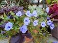 青いお花♪