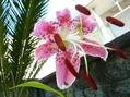 今朝の花♡