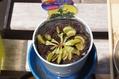 食虫植物が仲間入り!