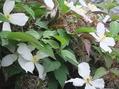 お休みしている間に咲いてました。NO.2